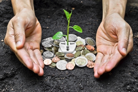 corporate waste: hands holding and caring a tree growing on a socket with coin   green energy   save the world