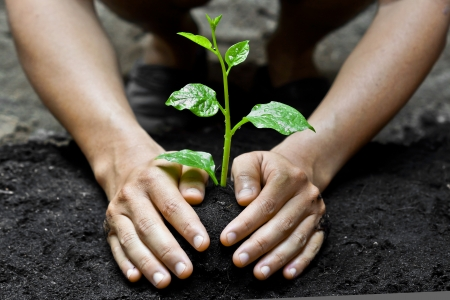 save tree: hands growing a young tree   save the world   heal the world Stock Photo
