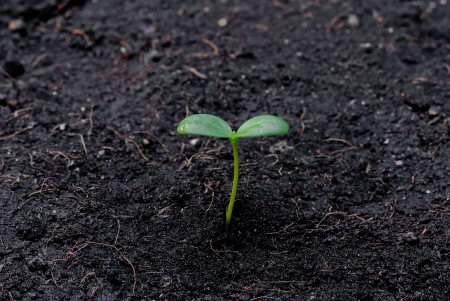 a young tree growing on a fertile soil