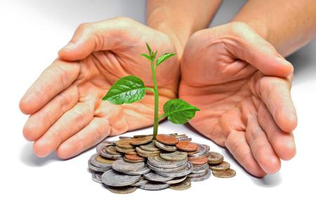 desarrollo sustentable: �rbol que crece en las monedas de desarrollo sostenible csr