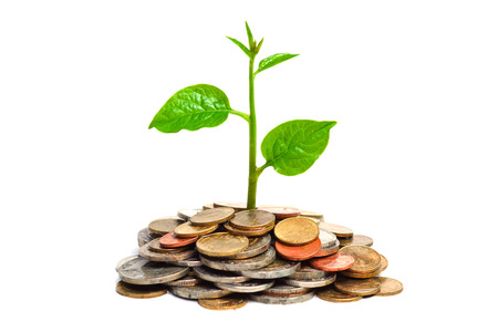 tree growing on coins   csr   sustainable development 版權商用圖片