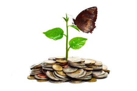 csr: tree growing on coins with a butterfly   csr   sustainable development Stock Photo