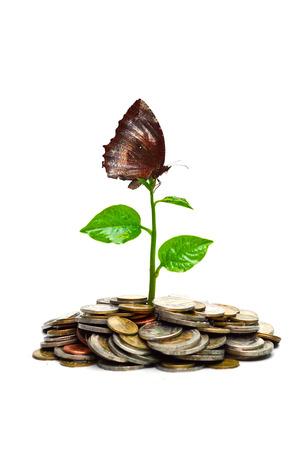 La plantation d'arbres sur les pièces avec un développement durable papillon rse Banque d'images - 24704225