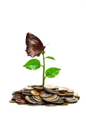 desarrollo sustentable: �rbol que crece en las monedas con un desarrollo sostenible csr mariposa Foto de archivo