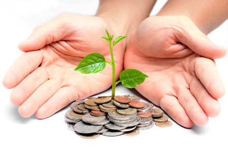 trees growing on coins   csr   sustainable development photo
