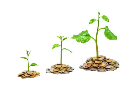 trees growing on coins   csr   sustainable development