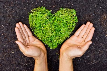 handen die groene hart gevormde boom boom gerangschikt in een hartvorm liefde natuur de wereld redden de wereld helen milieubehoud