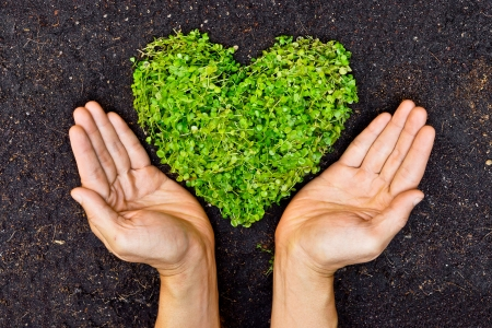 corporate social: hands holding green heart shaped tree   tree arranged in a heart shape   love nature   save the world   heal the world   environmental preservation