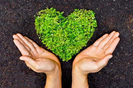 fertilizing: hands holding green heart shaped tree   tree arranged in a heart shape   love nature   save the world   heal the world   environmental preservation