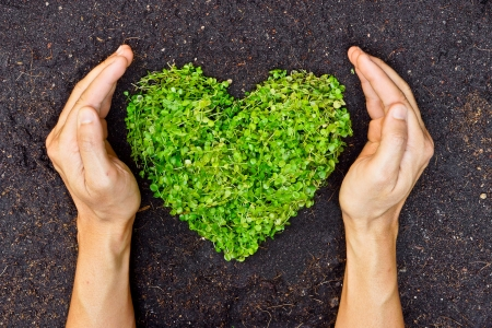 environmental responsibilities: hands holding green heart shaped tree   tree arranged in a heart shape   love nature   save the world   heal the world   environmental preservation