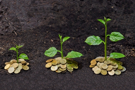 growth in economy: tress growing on coins   csr   sustainable development   economic growth