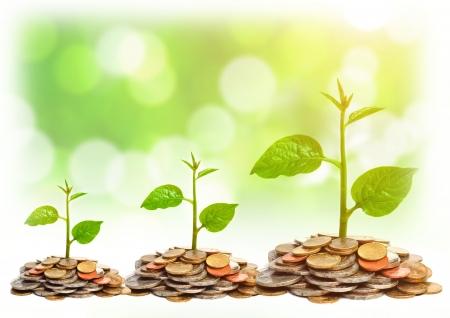 desarrollo sustentable: �rboles que crecen en las monedas csr �rboles de desarrollo sostenible que crece en la pila de monedas