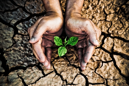 csr: hands holding tree growing on cracked earth  hands growing tree   save the world   environmental problems   cut tree