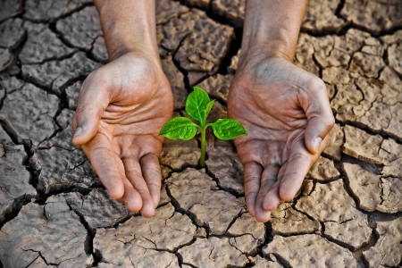 hands holding tree growing on cracked earth  hands growing tree   save the world   environmental problems   cut tree photo