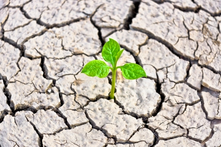 scarcity: tree growing on cracked earth   growing tree   save the world   environmental problems   cut tree
