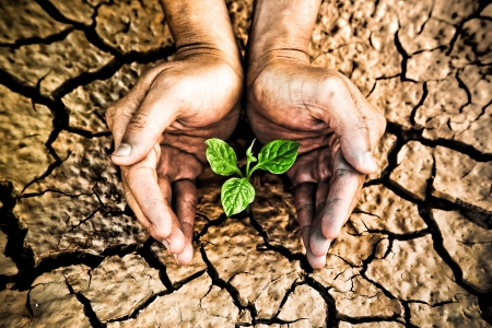 scarcity: hands holding tree growing on cracked earth  hands growing tree   save the world   environmental problems   love nature   heal the world   cut tree Stock Photo