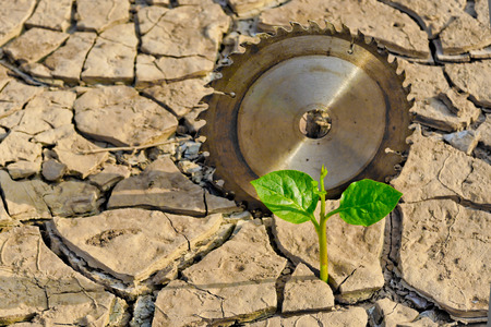 tree growing on cracked earth surrounded by saw blades   growing tree   save the world   environmental problems   growing tree   csr   natural destruction photo