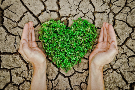 hands holding a tree arranged as a heart shape on cracked earth   growing tree   love nature   save the world   csr photo