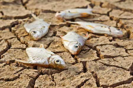 famine: fish die on cracked earth   drought   river dried up   animal extinction   famine   no rain   drought