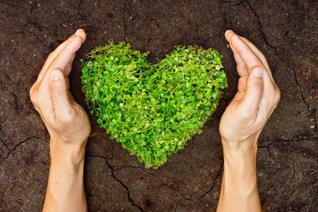 hands holding green heart shaped tree   tree arranged in a heart shape   love nature   save the world   heal the world   environmental preservation
