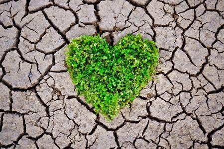 mains tenant un arbre disposé en forme de coeur sur terre craquelée arbre à croissance amour nature sauver la RSE dans le monde Banque d'images - 26695122
