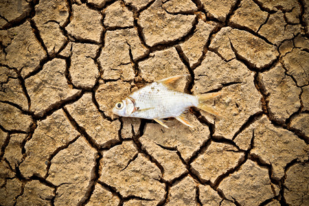 extinction: poissons sont morts sur terre craquel�e s�cheresse rivi�re ass�ch� famine raret� r�chauffement climatique destruction naturelle extinction Banque d'images