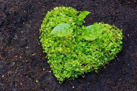 緑のハート形の世界を救うハート形愛自然の中で整理される木を癒す世界環境保全