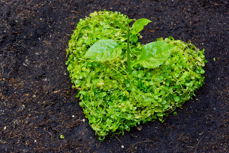preservation: green heart shaped tree   tree arranged in a heart shape   love nature   save the world   heal the world   environmental preservation