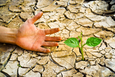 hand trying to reach a tree growing on cracked earth   tree growing on cracked earth   growing tree   save the world   environmental problems   cut tree   death photo