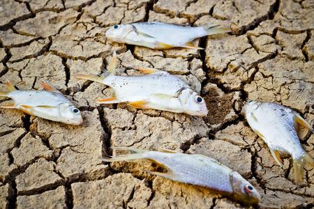 extinction: poissons sont morts sur la terre craquel�e s�cheresse rivi�re ass�ch� famine raret� r�chauffement climatique destruction naturelle extinction Banque d'images