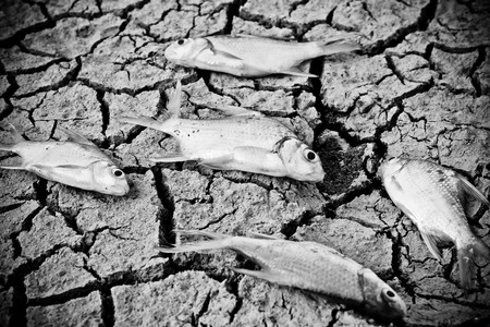 famine: fish died on cracked earth   drought   river dried up  famine   scarcity   global warming   natural destruction   extinction