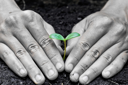 two hands holding and caring a young green plant   planting tree photo