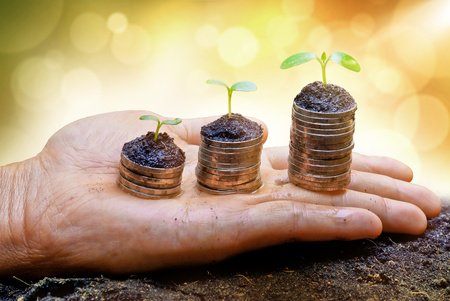 stock predictions: hands holding tress growing on coins
