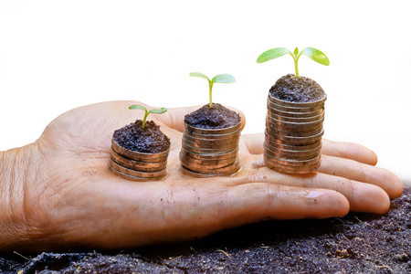 hands holding tress growing on coins  photo