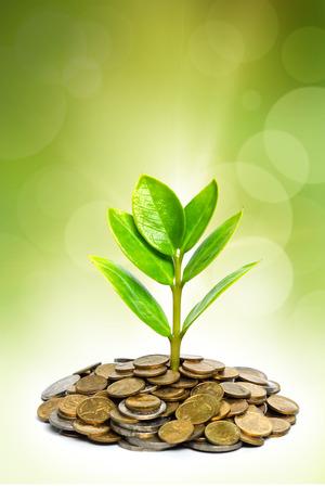 gobierno corporativo: árboles que crecen en las monedas