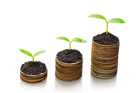tress: tress growing on coins    Stock Photo