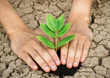 save tree: hands holding tree growing on cracked earth  hands growing tree   save the world