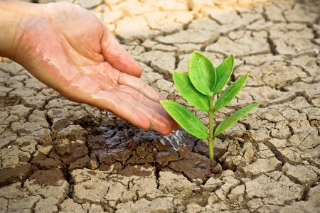 handen die boom groeien op gebarsten aarde handen groeiende boom de wereld redden