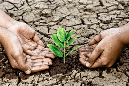 hands holding tree growing on cracked earth  hands growing tree   save the world  photo