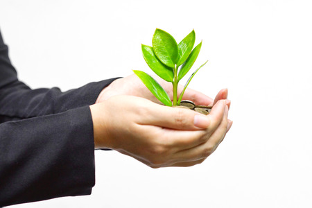 money pounds: Palms with a tree growing from pile of coins   hands holding a tree growing on coins   csr green business   business ethics Stock Photo