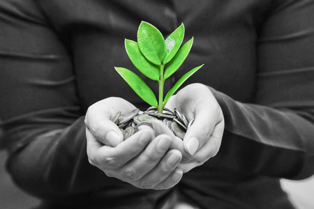 corporate responsibility: Palms with a tree growing from pile of coins   hands holding a tree growing on coins   csr green business   business ethics Stock Photo