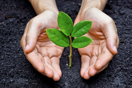 preservation: two hands holding and caring a young green plant   planting tree   growing a tree   love nature   save the world Stock Photo