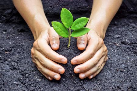 Deux mains tenant et occupent un jeune vert de plantation d'arbres de plante qui pousse un amour la nature de l'arbre sauver le monde Banque d'images - 26711515
