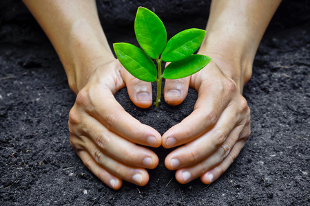 save tree: two hands holding and caring a young green plant   planting tree   growing a tree   love nature   save the world Stock Photo