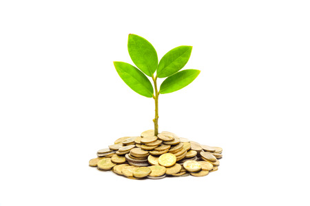 tree growing on a pile of golden coins   csr   sustainable development   tree growing on stack of coins   saving photo