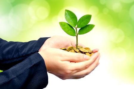 gobierno corporativo: Palmas con un �rbol que crece desde el mont�n de monedas de manos sosteniendo un �rbol que crece en monedas csr �tica empresarial de negocios verdes buena gobernanza Foto de archivo