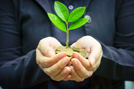 money pounds: Palms with a tree growing from pile of coins   hands holding a tree growing on coins   csr green business   business ethics   good governance