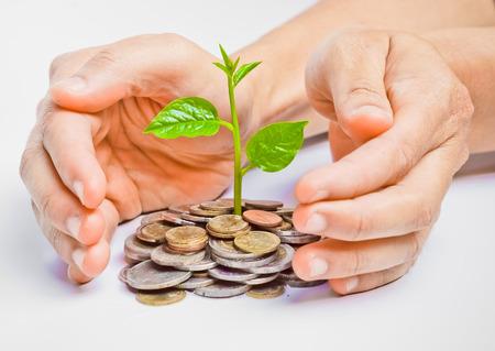 gobierno corporativo: manos sosteniendo árboles crece en monedas csr Foto de archivo