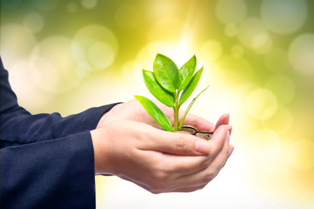 etica: Palmas con un árbol que crece de pila de monedas manos sosteniendo un árbol que crece en las monedas de ética empresarial de negocios csr verdes buen gobierno