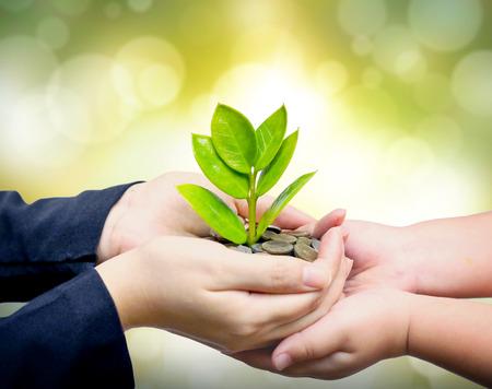 sostenibilidad: Palmas con un árbol que crece de pila de monedas apoyadas por kid s manos manos dando un árbol que crece en las monedas de los niños s manos csr ética empresarial de negocios verdes Foto de archivo